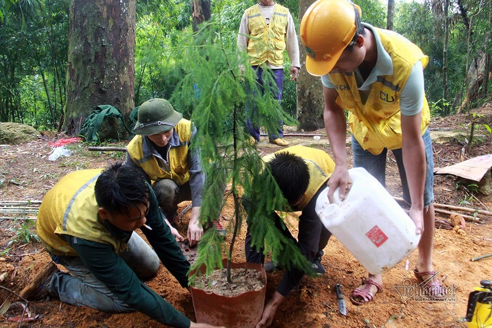 Cây quý sắp tuyệt chủng nảy nở kỳ diệu trên rừng thiêng Yên Tử