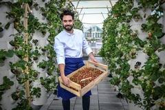Trồng rau trên sân thượng, nông dân bội thu 900kg rau trái mỗi vụ