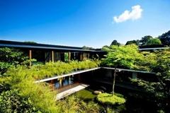 Ngôi nhà đẹp như resort nhờ vườn trên mái, hồ nước ngập cây