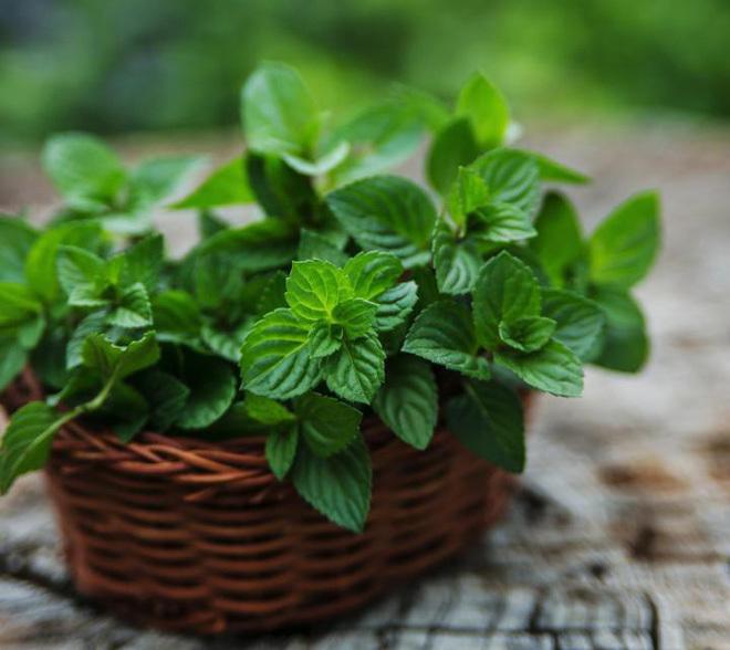 7 loại cây trồng trong nhà lúc nào cũng mang may mắn, tài lộc