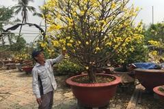 'Mai Tết 2018 dù có tăng giá cũng không bù được thiệt hại của nhà vườn'