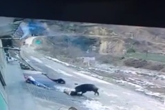 Lợn rừng tấn công người, 1 nạn nhân tử vong