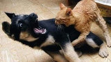 Những chú mèo chuẩn bị thống trị thế giới