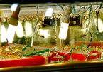 Cướp tiệm vàng táo tợn ở Bình Dương