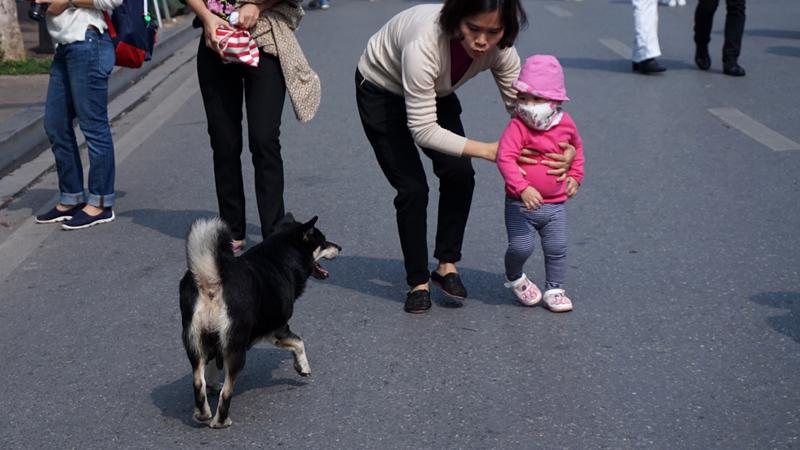 Hà Nội, đăng ký nuôi chó