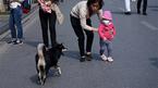 Hà Nội: Nuôi chó phải đăng ký với chính quyền