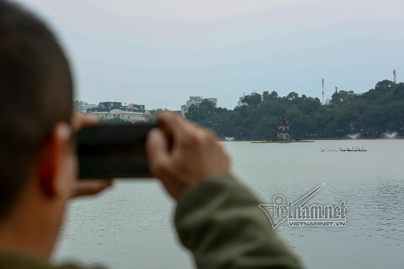 thiên nga, hồ Gươm, Hà Nội