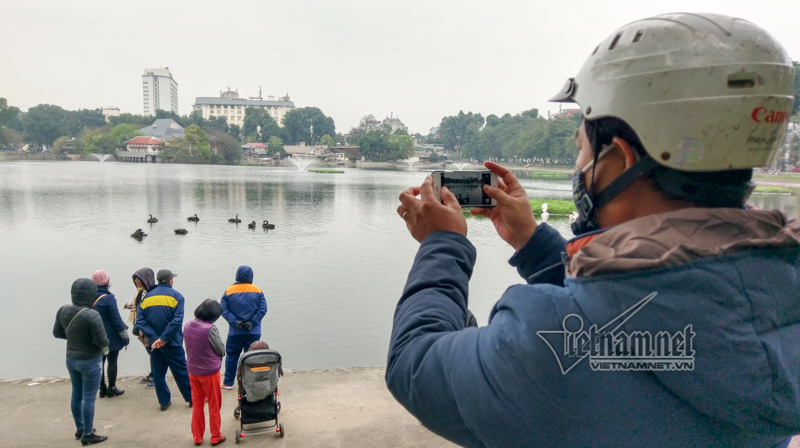 Thiên nga, hồ Thiền Quang, Hà Nội