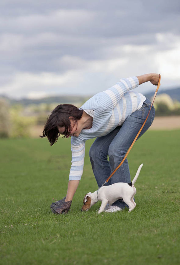 Anh: Người chủ bị phạt nếu không gắn chíp điện tử cho chó