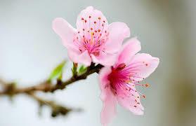Tháng chạp,Mùa xuân,mưa xuân,mùa chim én