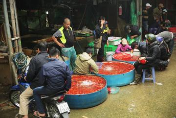 Chợ cá lớn nhất Hà Nội tấp nập trước ngày ông Công, ông Táo chầu trời