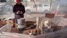 Đột nhập chợ thịt chó Hàn Quốc muốn giấu thế giới