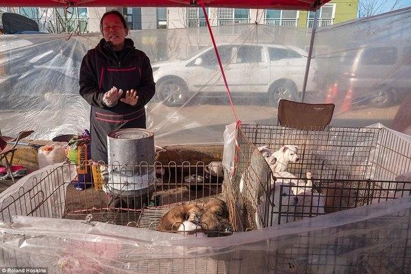 khu chợ,thịt chó,Hàn Quốc,Thế vận hội mùa đông