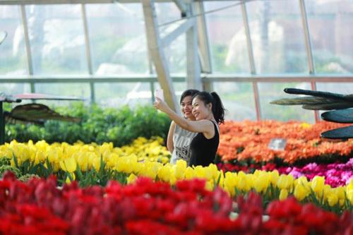 Vườn hoa Tết đẹp, độc nhất Việt Nam