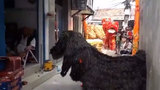 Phong cách múa lân cho năm mới Mậu Tuất