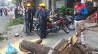 Cây xanh bật gốc, đè 4 người trên phố Sài Gòn