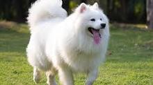 Những điều thú vị chưa biết về loài chó