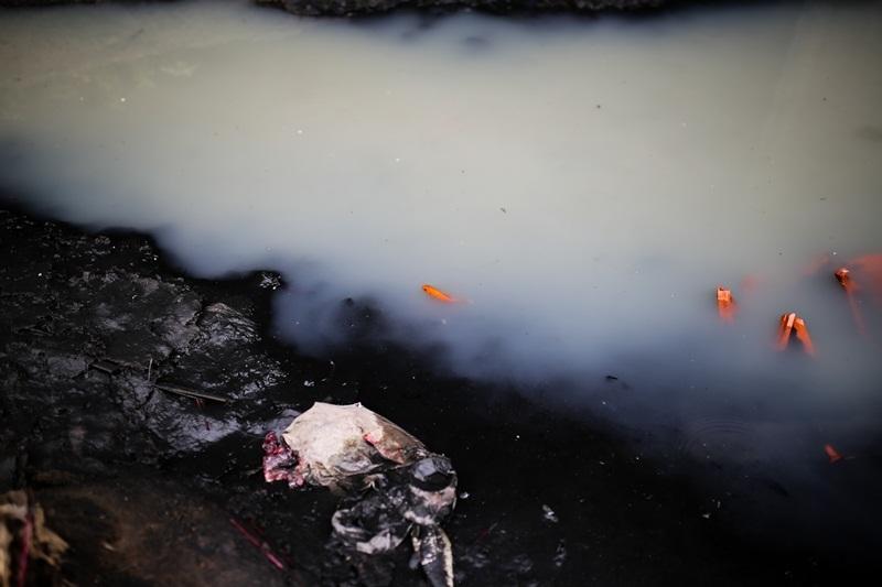 Ô nhiễm môi trường,Ông Công ông Táo,Phóng sinh