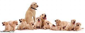 Năm Mậu Tuất bàn chuyện thú vị về loài chó