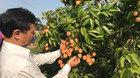 Lão nông chăm 12 gốc cây, gặp nhau buôn chuyện Mỹ - Nhật