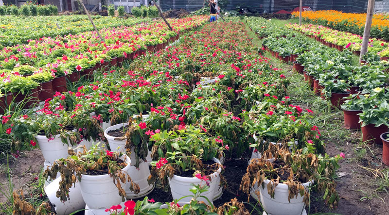 Hoa Tết,Sài Gòn,Làng hoa,Tết 2018