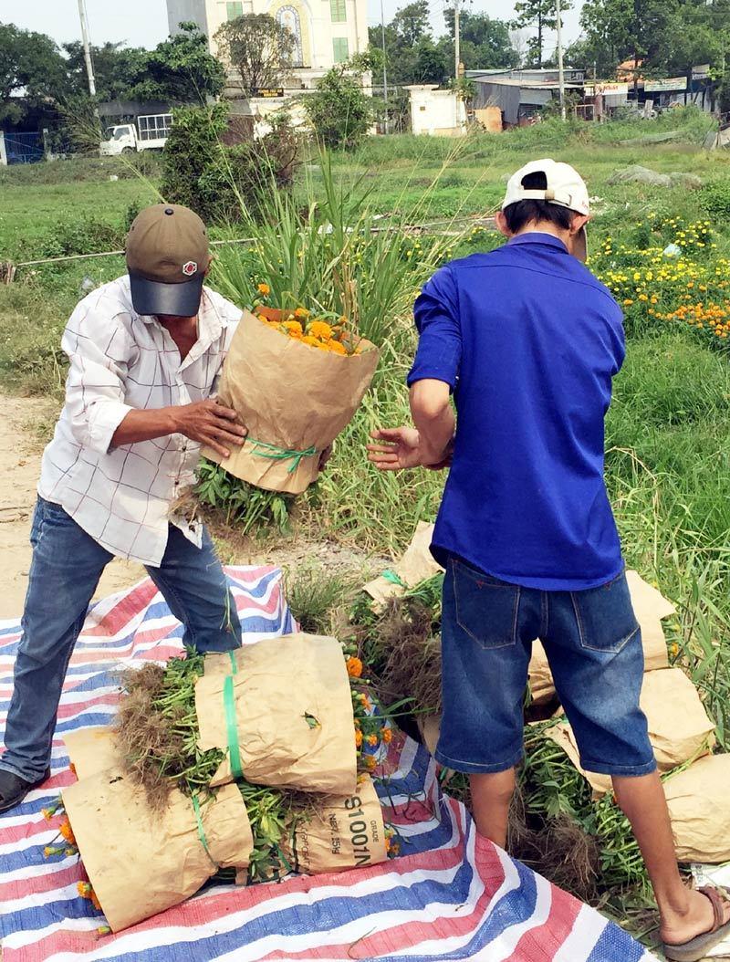Làng hoa ở Sài Gòn hối hả ngày cận Tết
