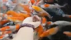 Đoạn clip dành cho những người yêu cá vàng