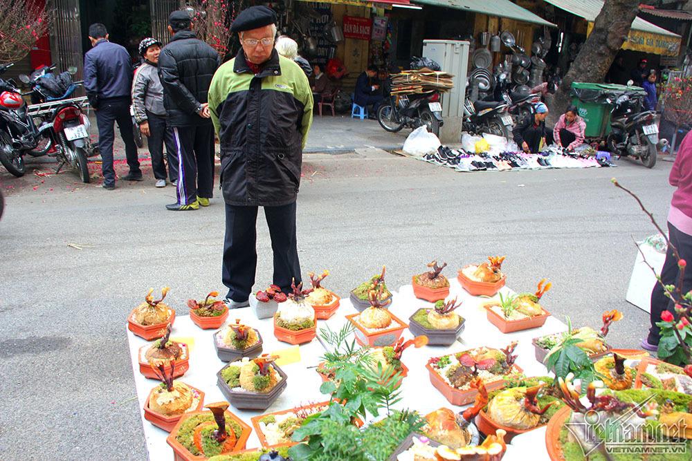 cây cảnh,nấm linh chi,chợ hoa Tết,tết Âm lịch,Tết Việt 2018