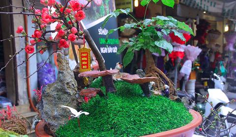 cây nấm linh chi