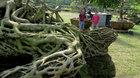 Cổ thụ giá 4 tỷ ở 'chợ hoa nhà giàu' Sài Gòn ngày cận Tết