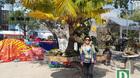 Cây dừa 'lạ' hơn 60 năm sống trên đá vẫn cho trái