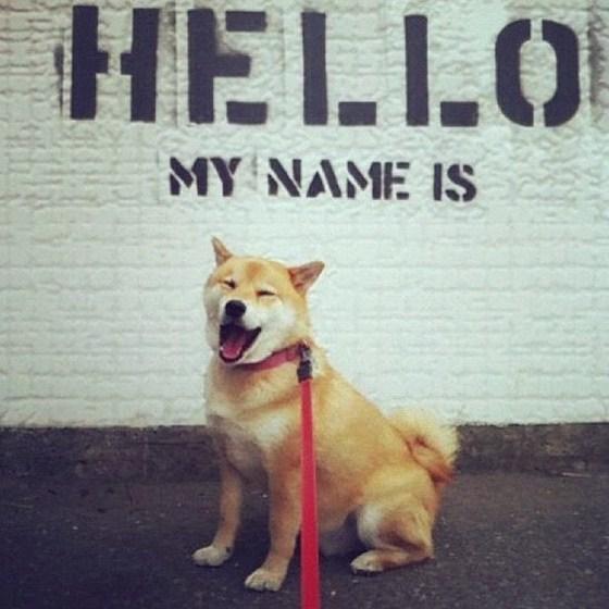 Chân dung các 'sao' cún cưng nổi nhất mạng xã hội