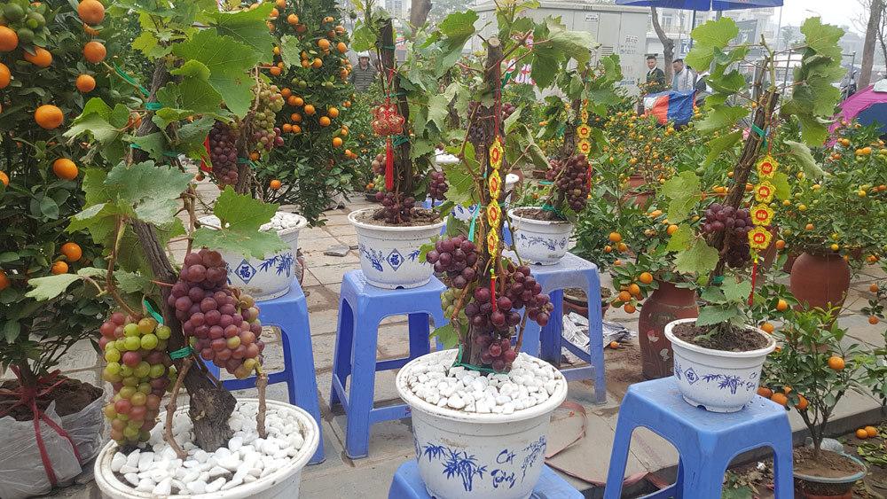 Tết Nguyên đán,chợ hoa xuân,siêu cây cảnh,cây độc