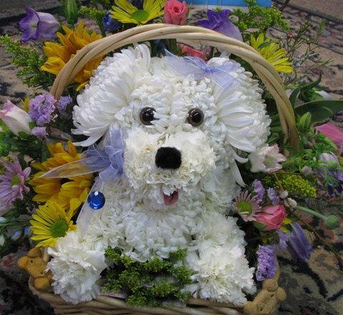Cắm hoa hình con chó