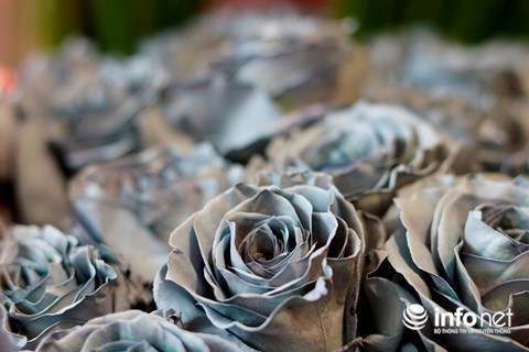 Hoa tươi Valentine,hoa hồng nhập khẩu,thị trường hoa tươi,hoa hồng,quà tặngValentine