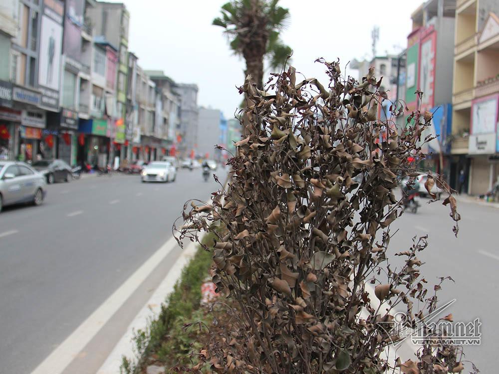 dự án trăm tỷ,Quảng Ninh