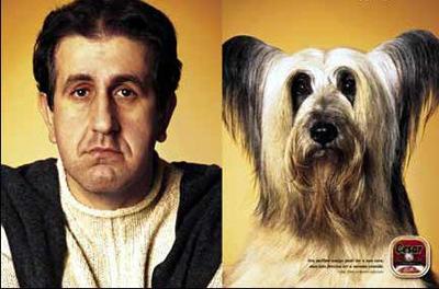 Những chú chó có ngoại hình giống chủ 'như tạc'