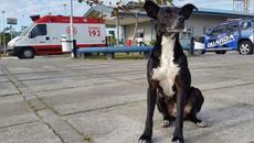 Những chú chó trung thành lay động hàng triệu trái tim