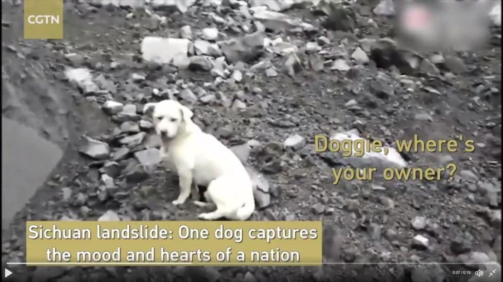 chú chó,trung thành,cảm động