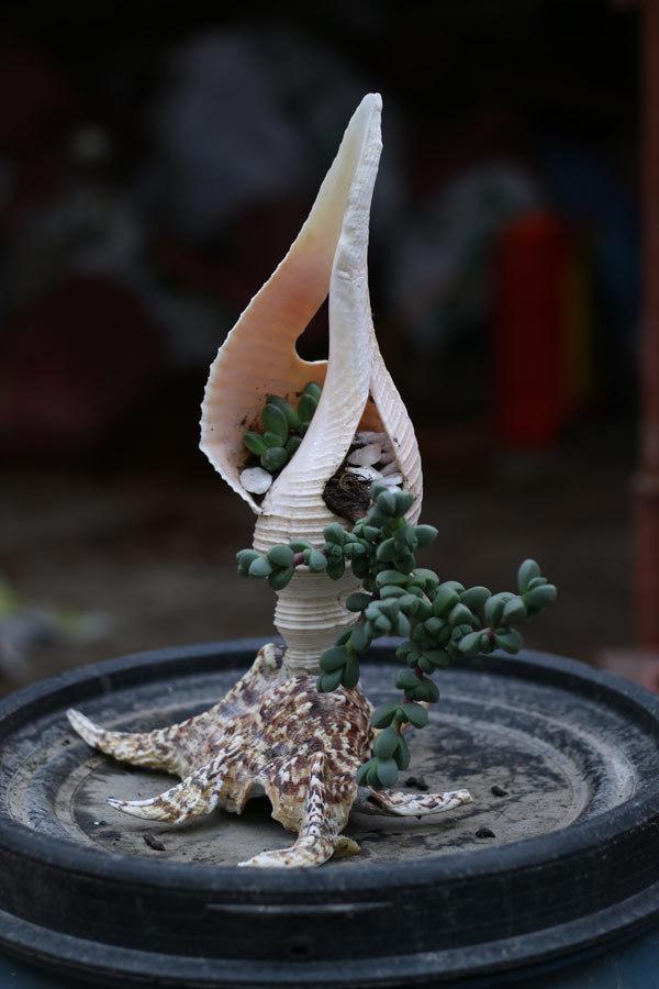 siêu cây,cây tết,Tết Nguyên đán