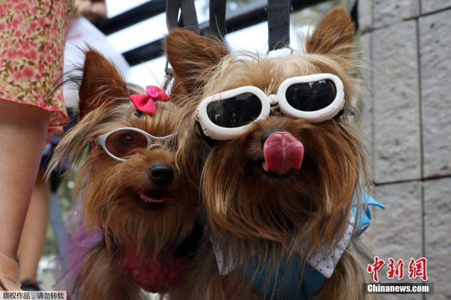 Xem tổ chức Valentine cho cún cưng