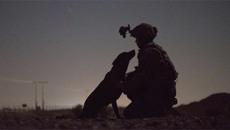 Vẻ dũng mãnh của các chú chó chiến binh Mỹ