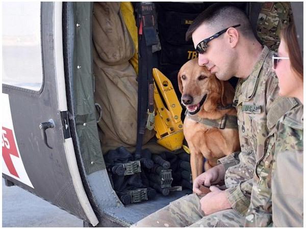 Chó chiến binh Mỹ,quân đội Mỹ