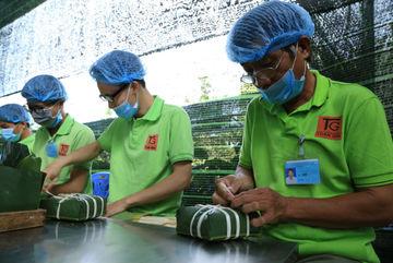 Làng nghề bánh chưng Nam Bộ hối hả vào tết