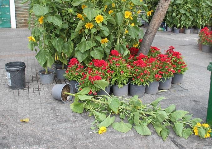 Chợ 30 Tết; Hiu hắt khách mua, chủ hàng đổ hoa xuống sông - ảnh 3