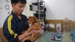 Những người trẻ cứu hàng ngàn chó mèo bị vứt bỏ