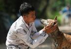 Chủ trại chó Phú Quốc ở Sài Gòn kể chuyện kiếm tiền tỷ từ nuôi chó