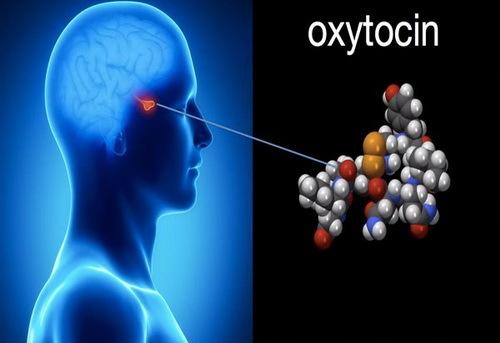 chuyện ấy,tình dục,Oxytocin