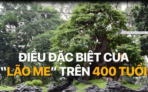 Cặp me 400 tuổi: Giá 1,6 triệu USD ở Sài thành