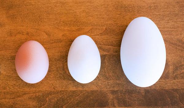 trứng gà,trứng vịt,trứng ngỗng